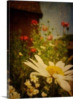 Poppy Days