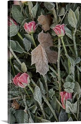 Roses for Memories