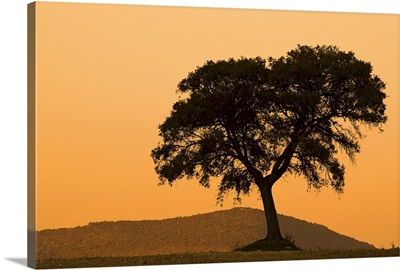 Silhoette of a Holm oak on top of a hill, Andalusia, Spain