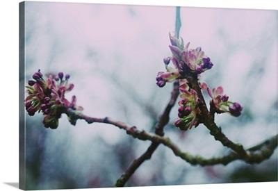 Spring Time Blossom