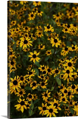 Summer Flowers at Sunwatch