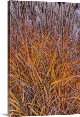 Sweet grass in garden at Inn at Cedar Falls