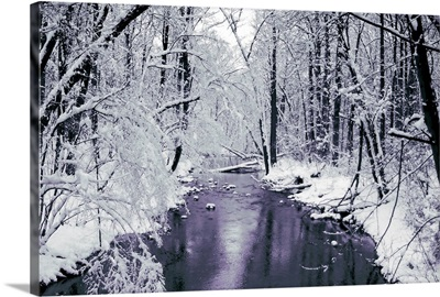 The Snow Forest