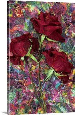 Three dried deep red roses lying with their stems on dish