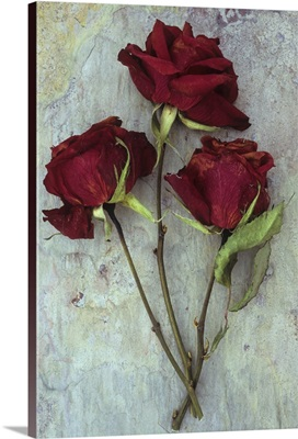 Three dried deep red roses with their stems and leaves on marbled slate stone