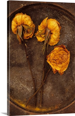 Three squashed dried roses once yellow and now brown lying on metal plate