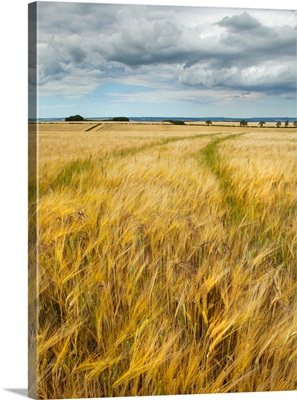 Tracks through field