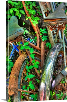 Two bikes rusting in undergrowth