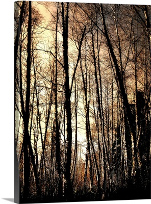 Winter forest light