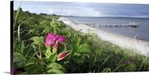 Coastal Bloom