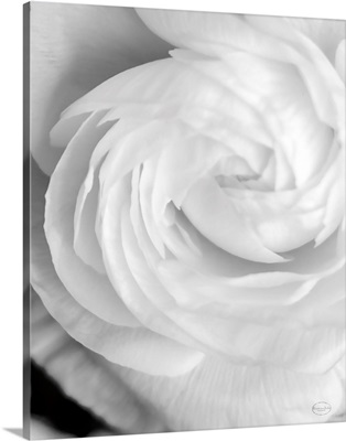 Black and White Petals I