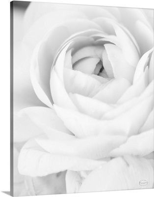 Black and White Petals III