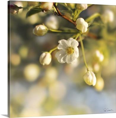 Blush Blossoms II