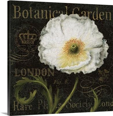 Botanical Garden II Borderless