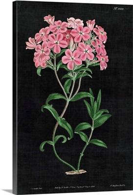 Botanical on Black Chart VI