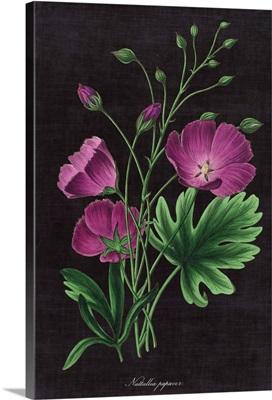 Botanical on Black Chart XIII