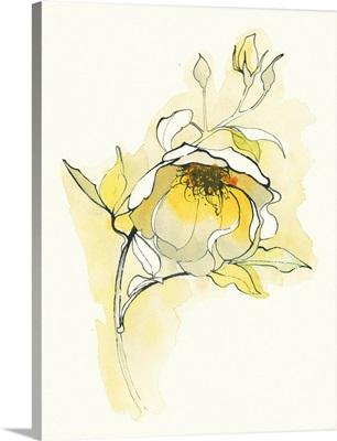 Carols Roses V