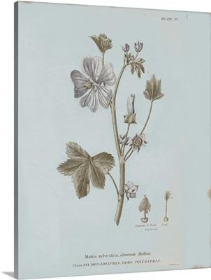 Conversations on Botany VII Blue