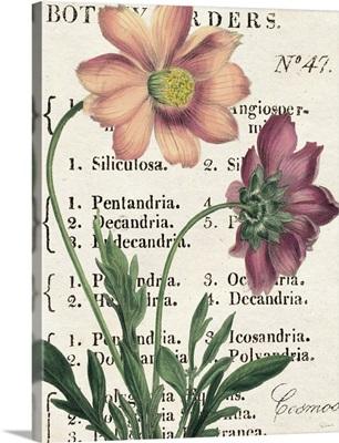 Cosmos Botany