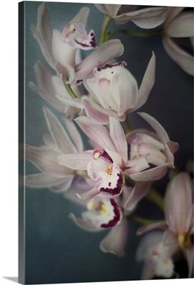 Dark Orchid I