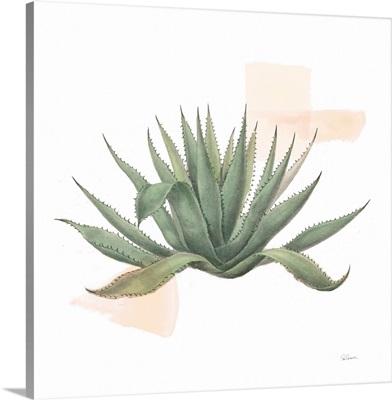 Desert Color Succulent I
