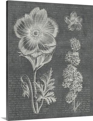 Eden Spring I Gray