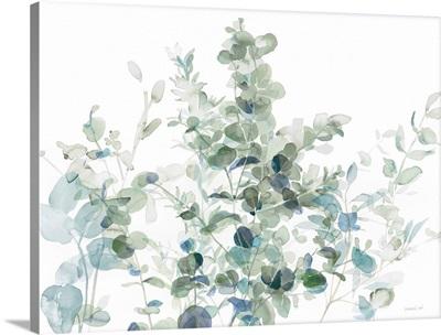 Eucalyptus I Cool