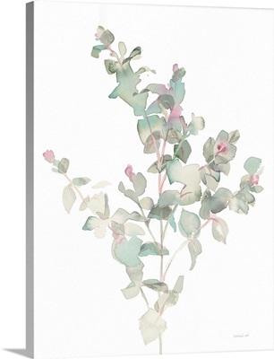 Eucalyptus II White
