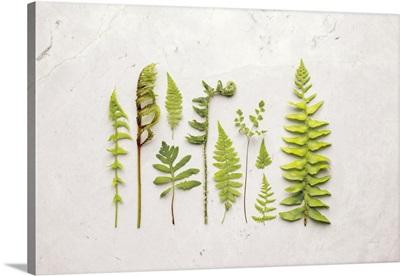 Flat Lay Ferns I