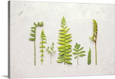 Flat Lay Ferns II