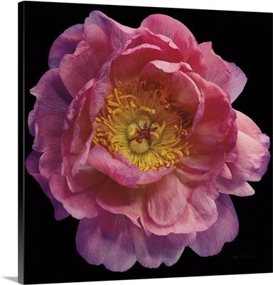 Floral Majesty II