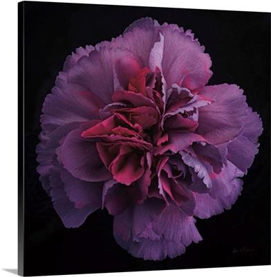 Floral Majesty IV
