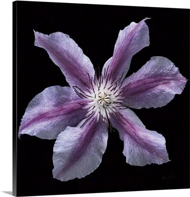 Floral Majesty VI