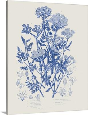 Flowering Plants IV