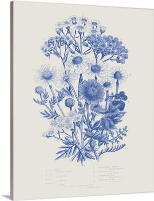 Flowering Plants V