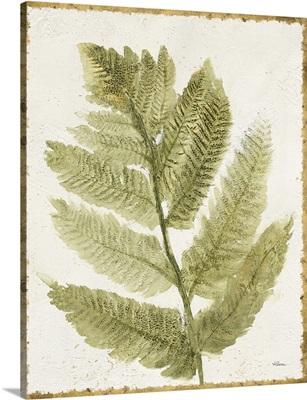 Forest Ferns I Antique