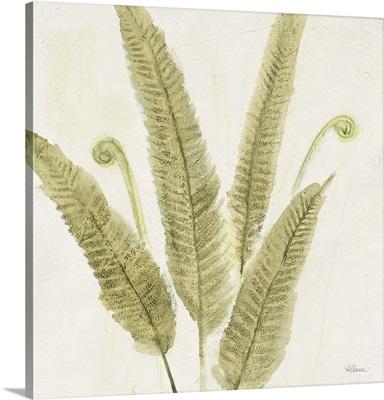 Forest Ferns II
