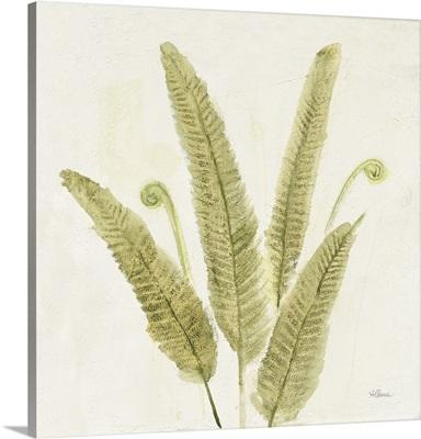 Forest Ferns II v2