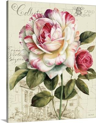 Garden View III - Rose