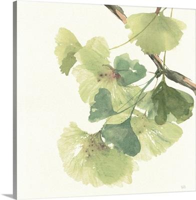 Ginkgo Leaves II Light