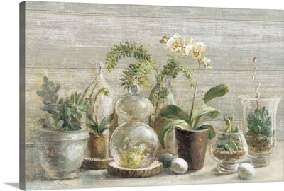 Greenhouse Orchids on Wood