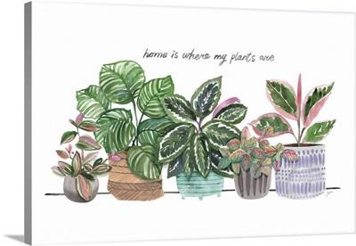 Happy House Plants I