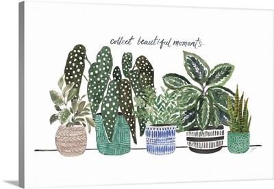 Happy House Plants II
