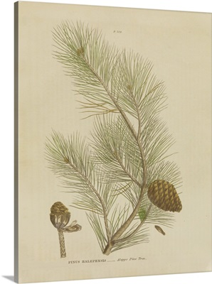 Herbal Botanical XIII