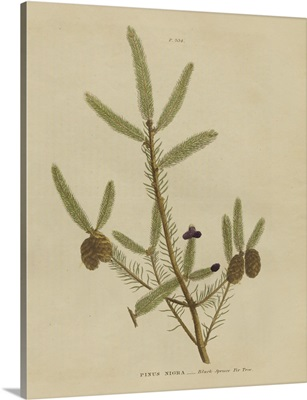 Herbal Botanical XIV