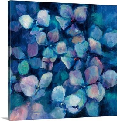 Midnight Blue Hydrangeas