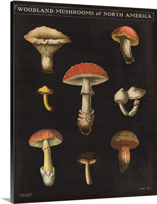 Mushroom Chart II