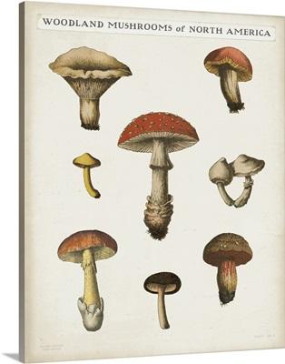 Mushroom Chart II Light
