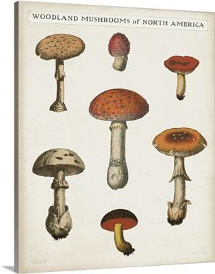 Mushroom Chart III Light