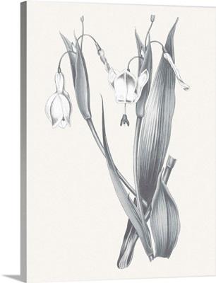 Neutral Botanical II